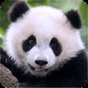 熊猫模拟器