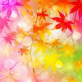 枫叶壁纸高清版